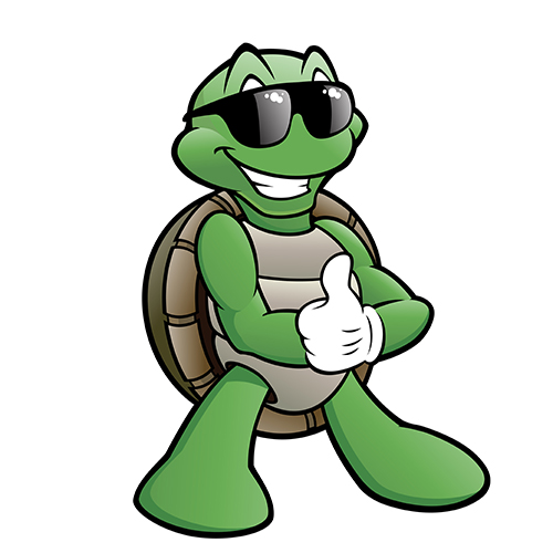 turtle with sunglasses